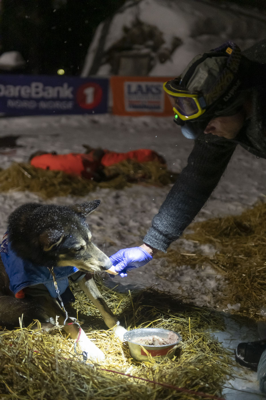 Petter Karlsson tries to coax one of his dogs to eat at the Karasjok checkpoint during the 2019 Finnmarksløpet race.
