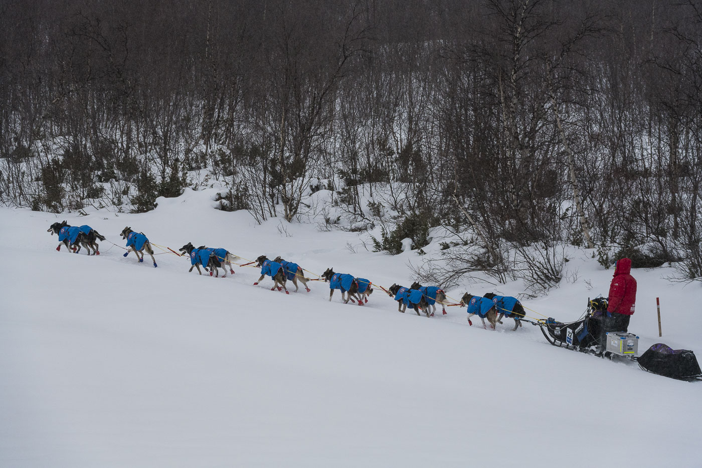 Petter Karlsson mushes his team along the shoreline of a frozen river away from the Kautokeino checkpoint.