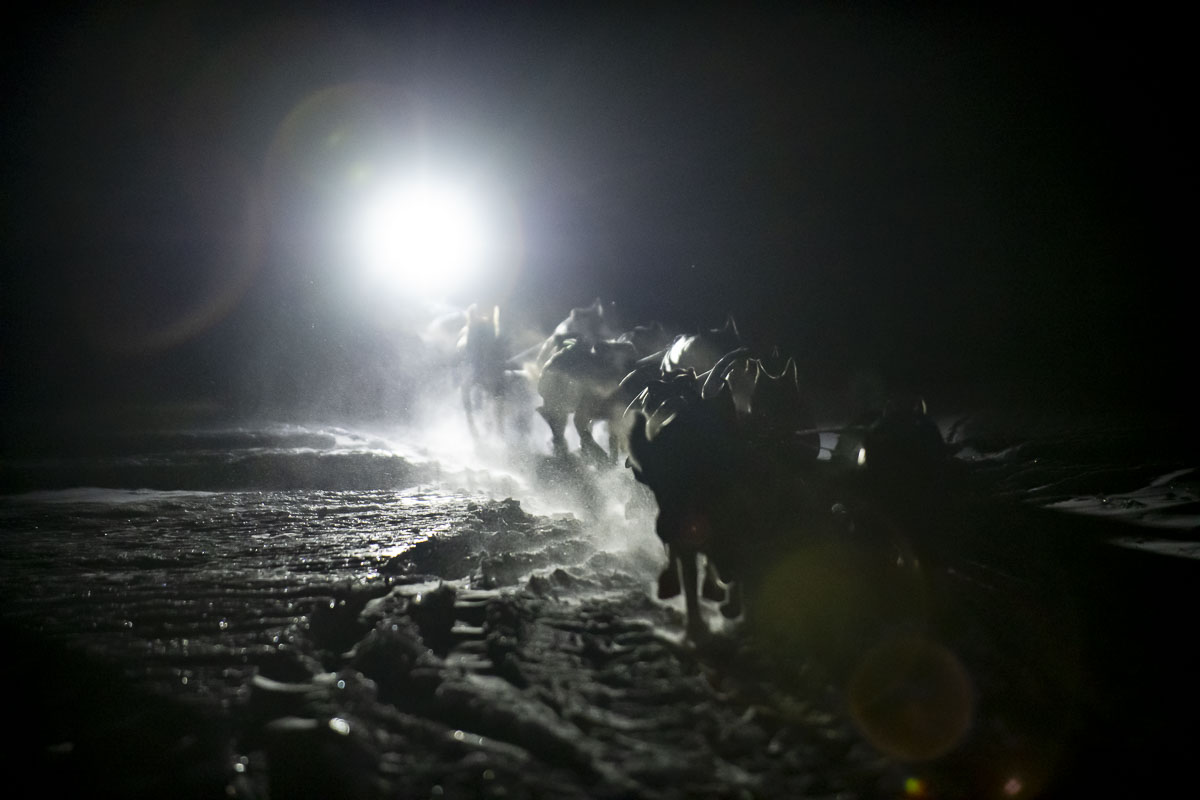 Lit only by the musher's head lamp, a dog team approaches a checkpoint at night during the 2019 Finnmarksløpet dogmushing race...
