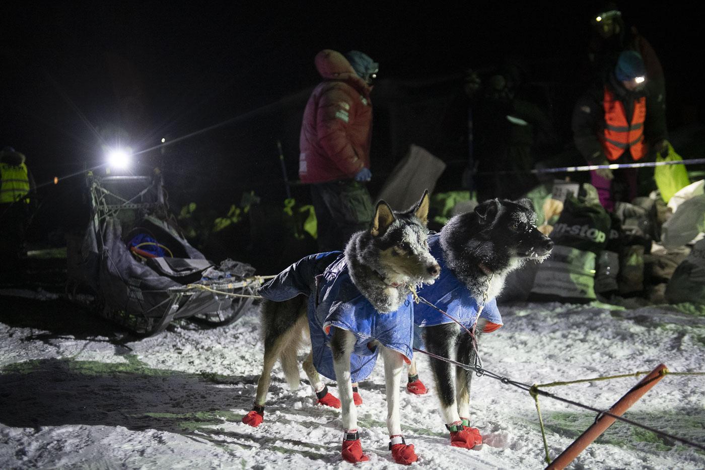 Finnmark, Finnmarksløpet, Norway, dog mushing, race, winter, photo