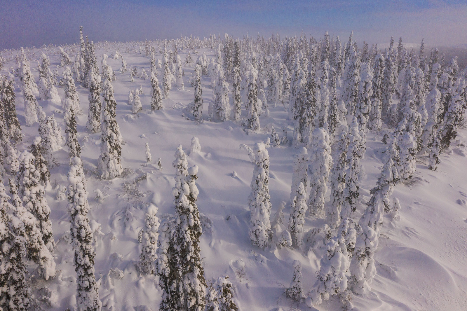 Aerial view of a snowy cluster of trees along the Dalton Highway near the Yukon River, Alaska.