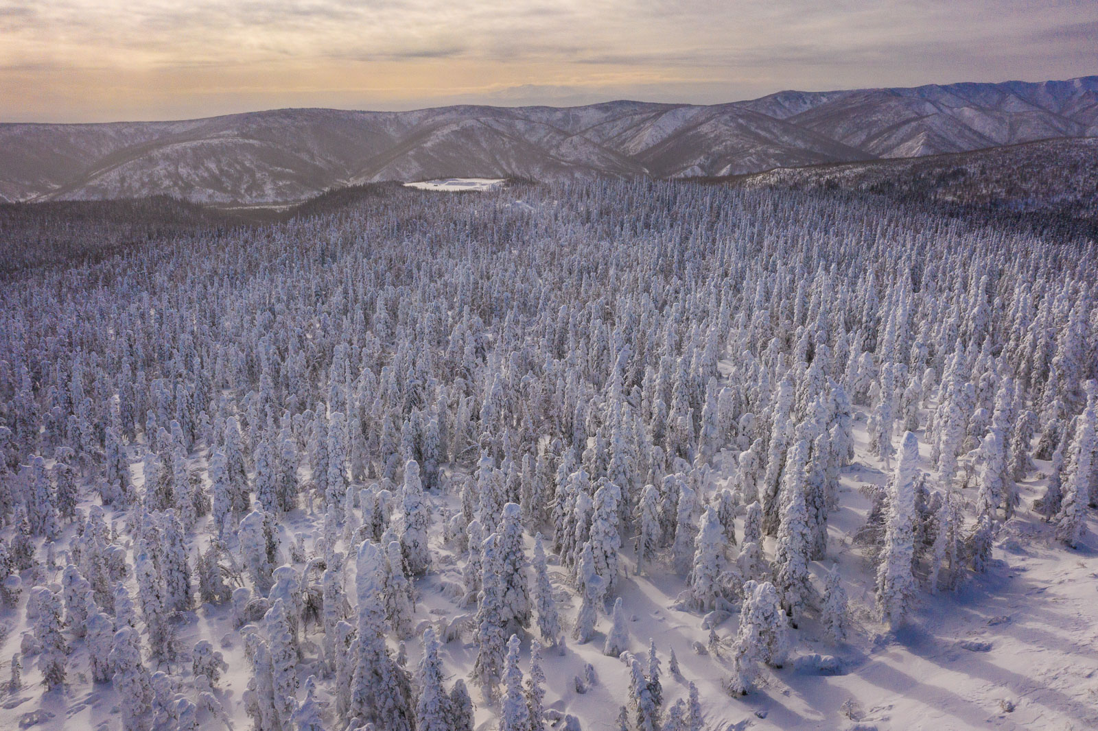 A grove of snowy trees fills the landscape along the Dalton Highway near the Yukon River, Alaska.