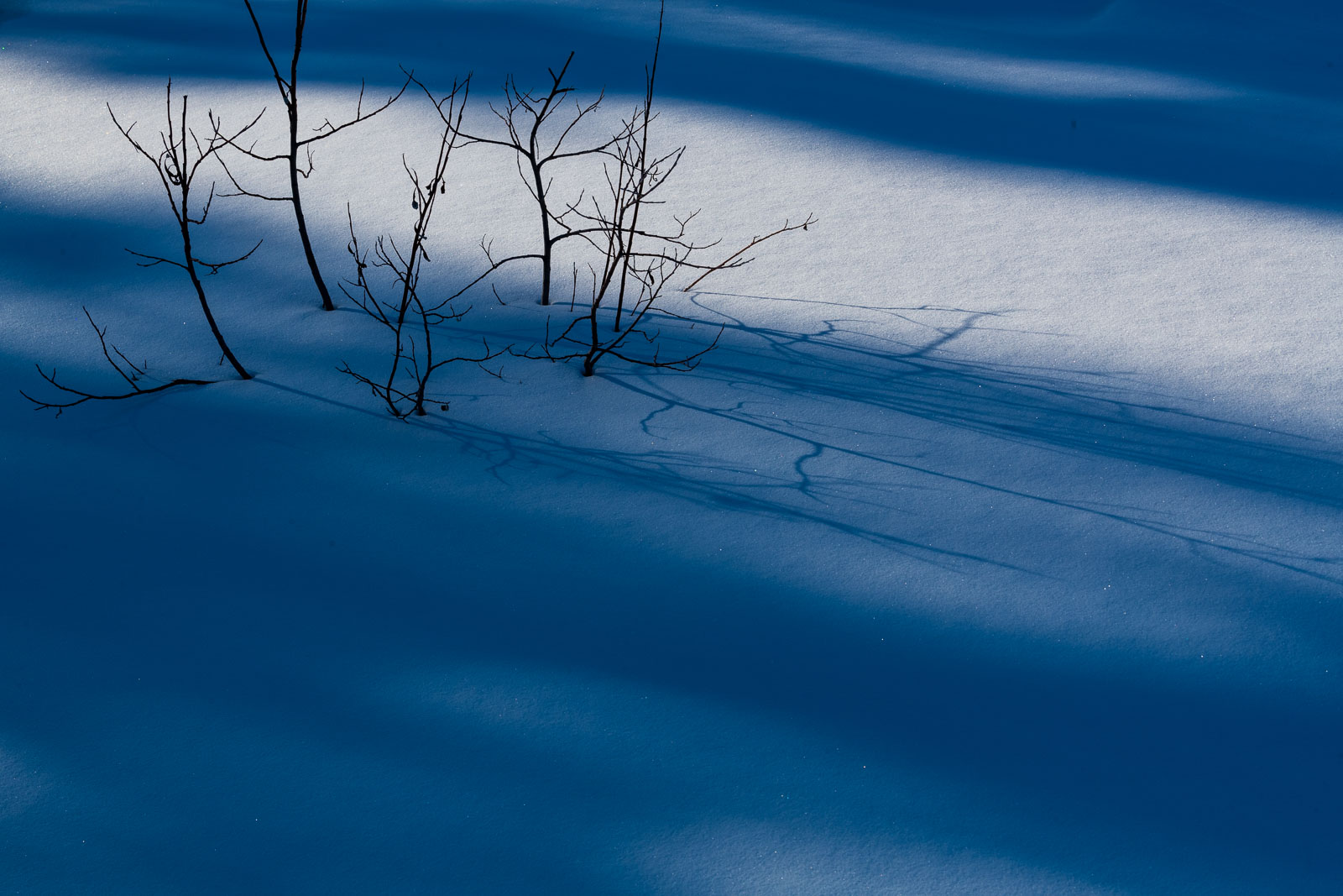 A bush pushes up through the snow on a frozen creek in Wiseman, Alaska.