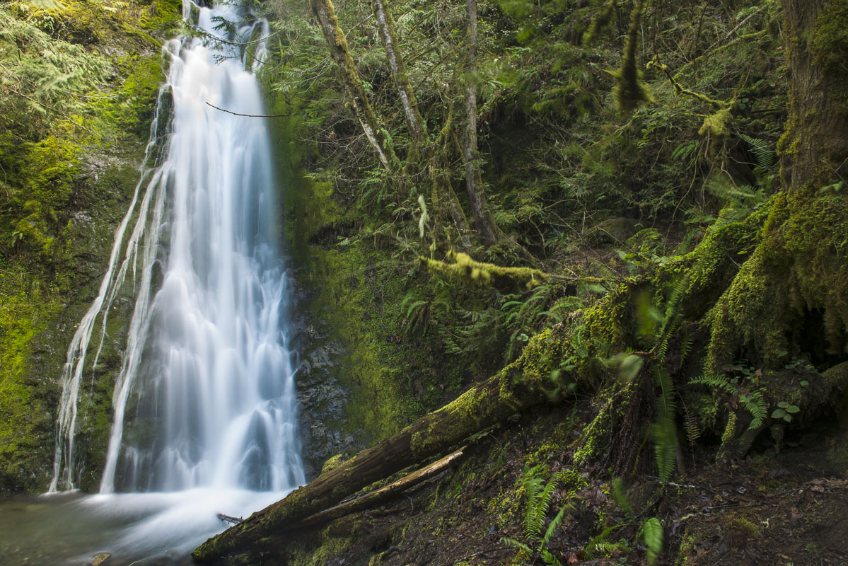 A waterfall provides a rich reminder of the rain fall levels that can be found in the forests of Olympic National Park, Washington...