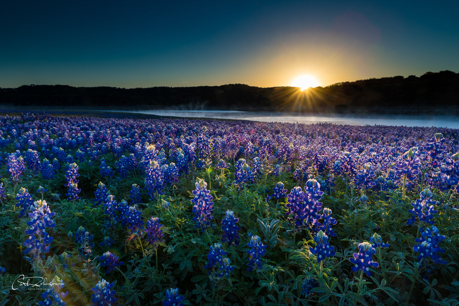 First light of the day shines through a field of bluebonnets alongside the lower Colorado River near Marble Falls, Texas.