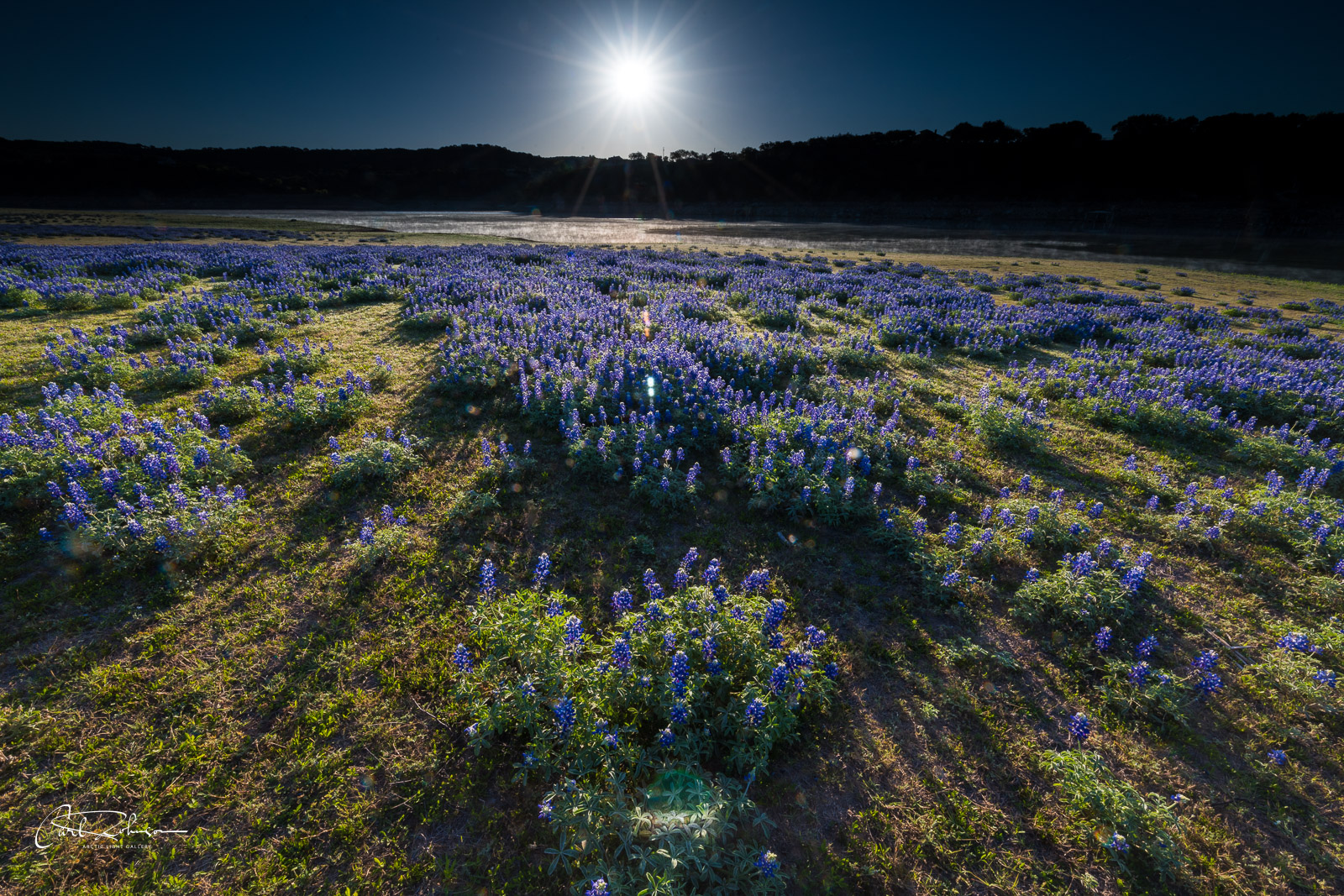 As the morning sun rises above the horizon, it casts long shadows on a patch of bluebonnets along the lower Colorado River near...