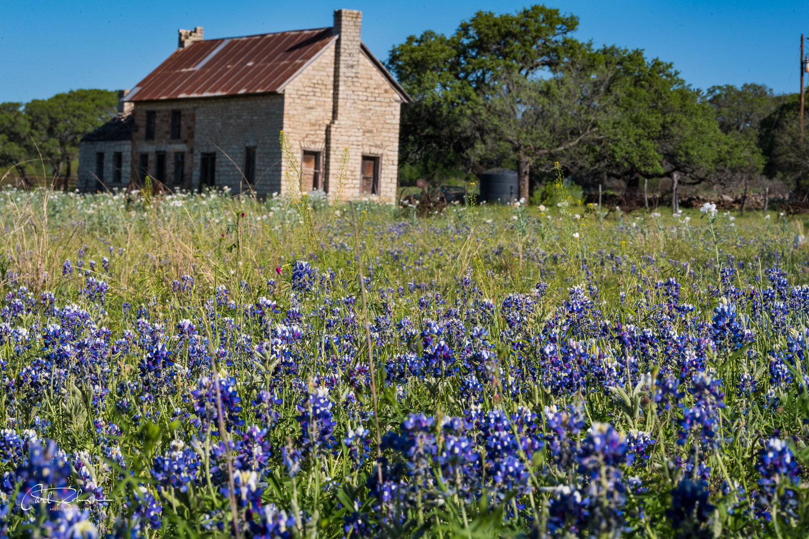 A patch of bluebonnets fills the foreground with an abandoned farm house in the distance near Marble Falls, Texas.