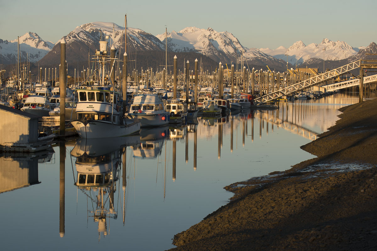 Boats in the small boat harbor at Homer, Alaska, rest low against the nearby land during an extreme low tide in late spring.