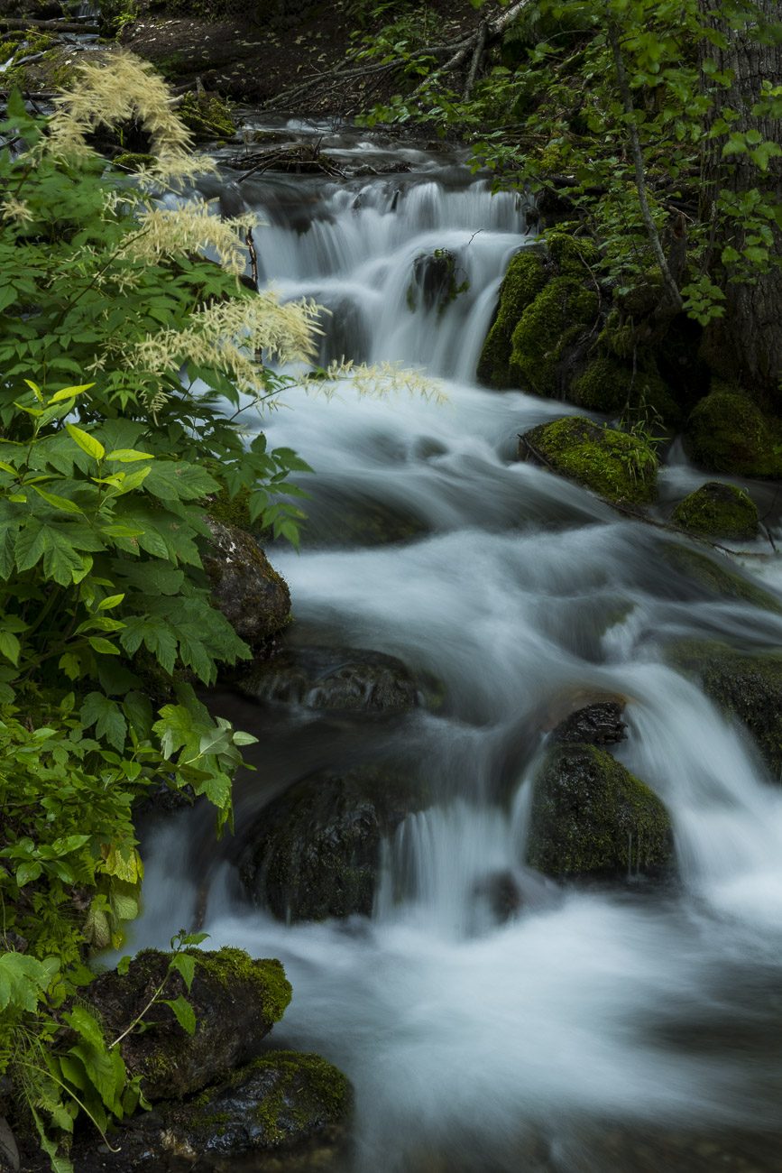 A cluster of goatsbeard blooms alongside McHugh Creek in Chugach State Park in mid-summer. I visit McHugh Creek several times...