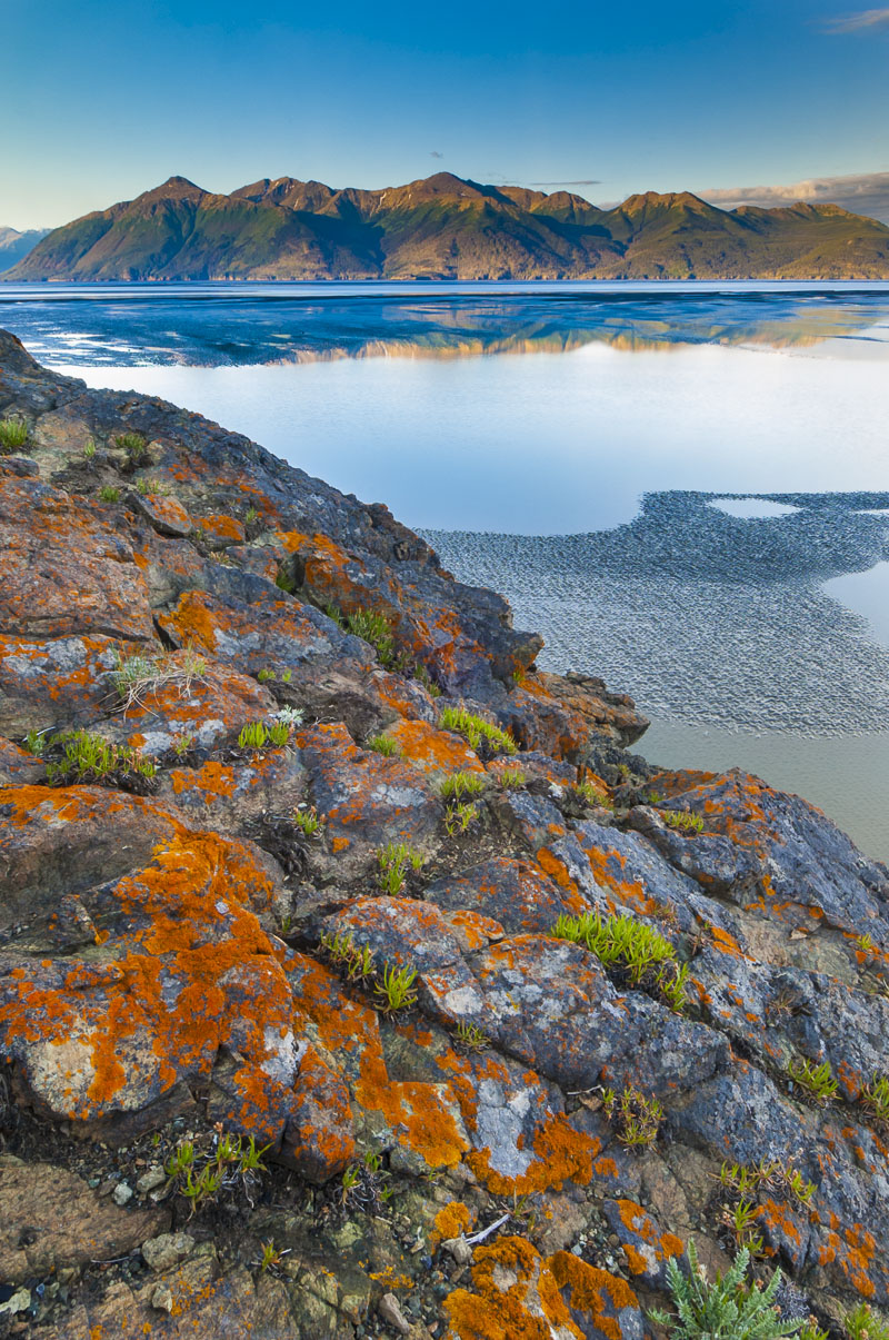 A patch of orange lichen provide a colorful foreground to rocks along the Turnagain Arm, as first light hits the Kenai Mountains...
