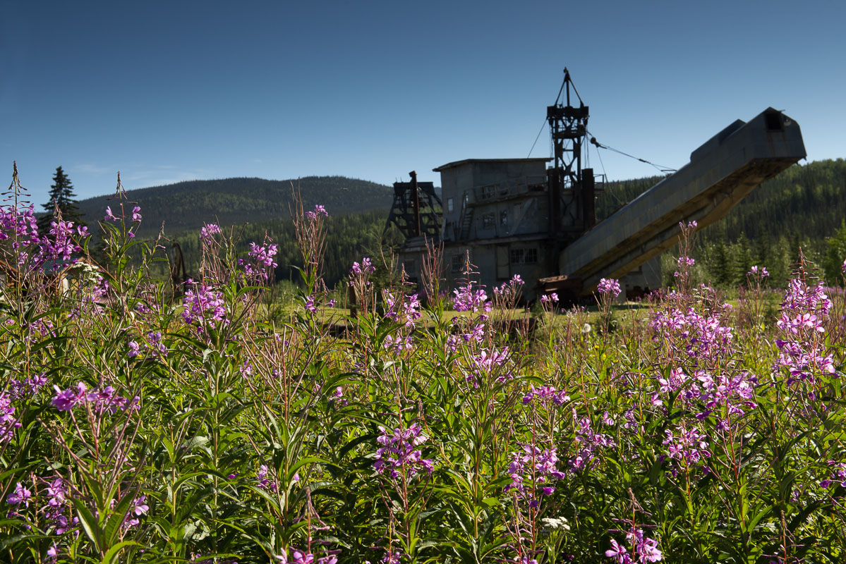 Alaska, Chicken, Pedro Gold Dredge, dredge, fireweed, history, summer, photo