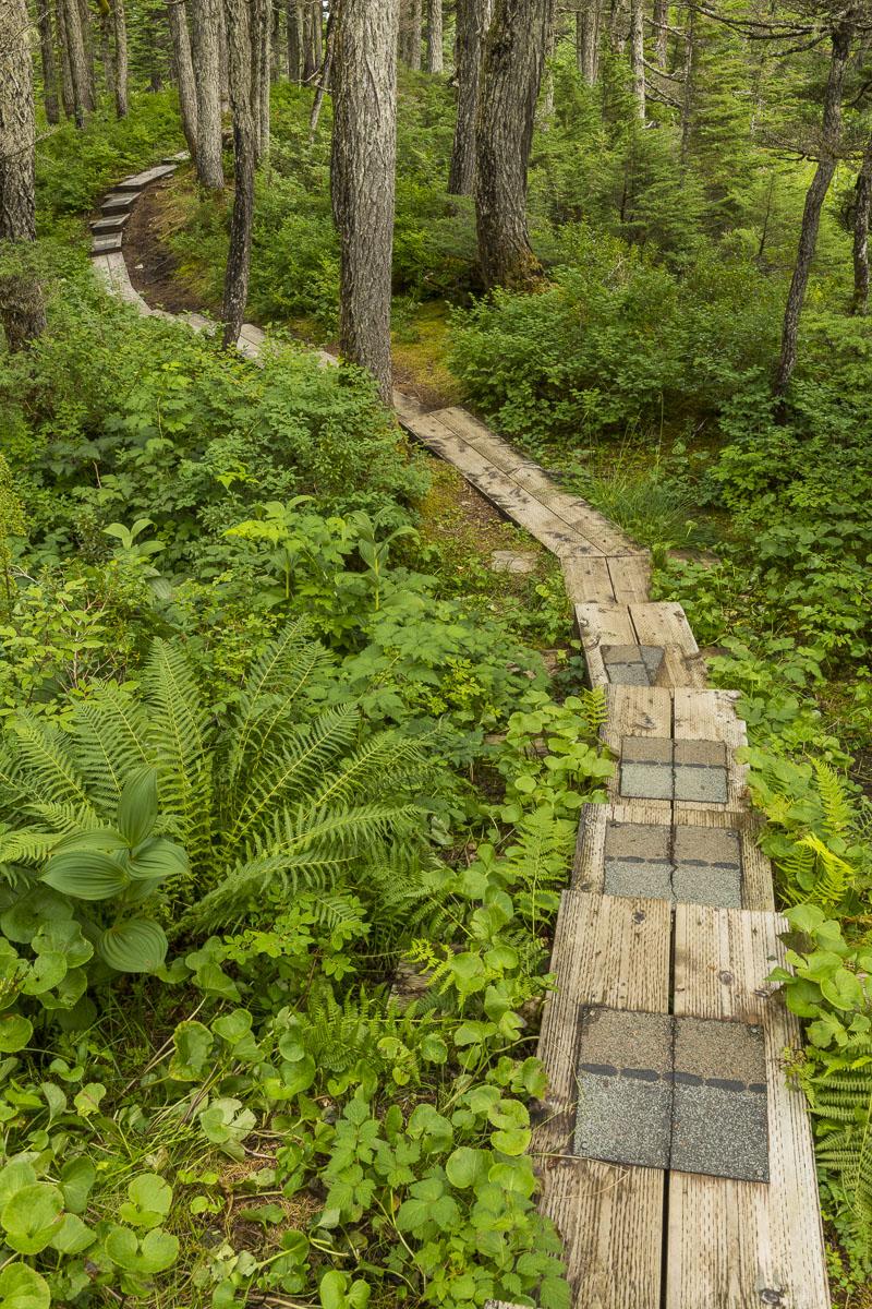 Engineered trail winds its way through temperate rainforest near Whittier.