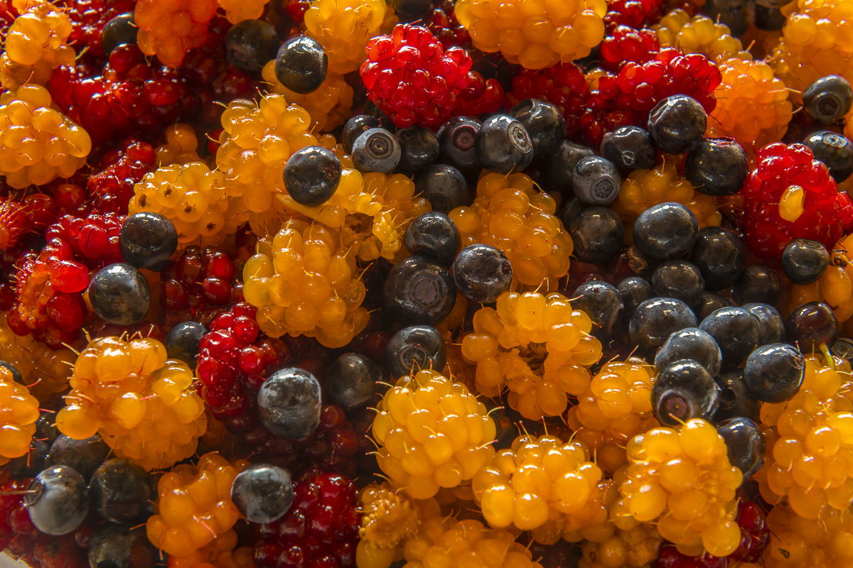 Mixture of highbush blueberries and salmonberries harvested in Prince William Sound.
