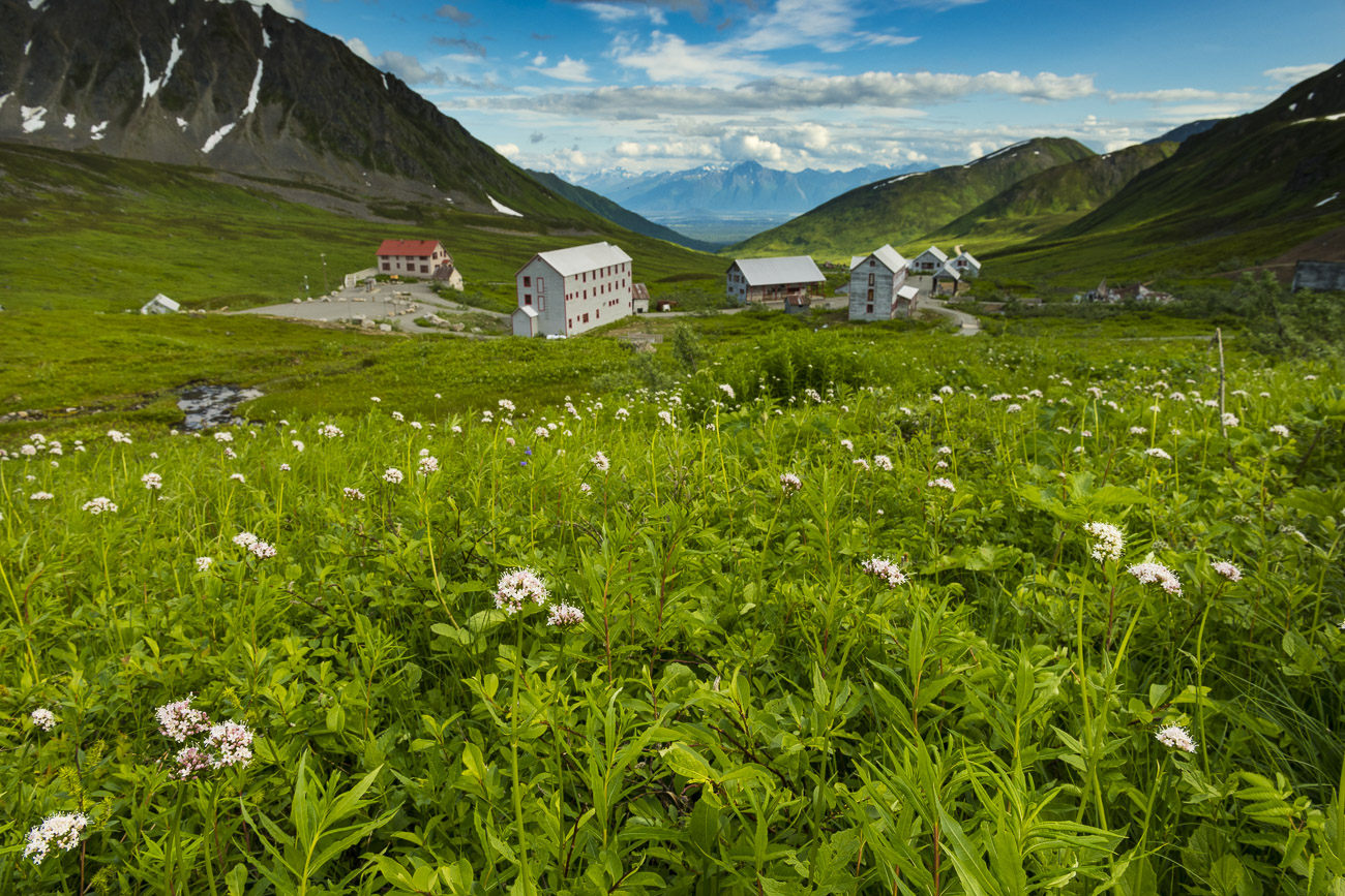 A field of wildflowers rolls down a hillside above historical mine buildings in the Independence Mine State Historical Site...