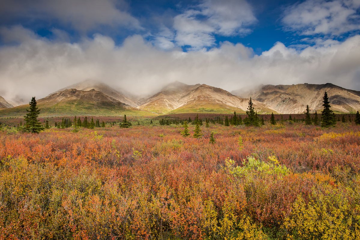 Alaska, Autumn, Denali National Park, photo