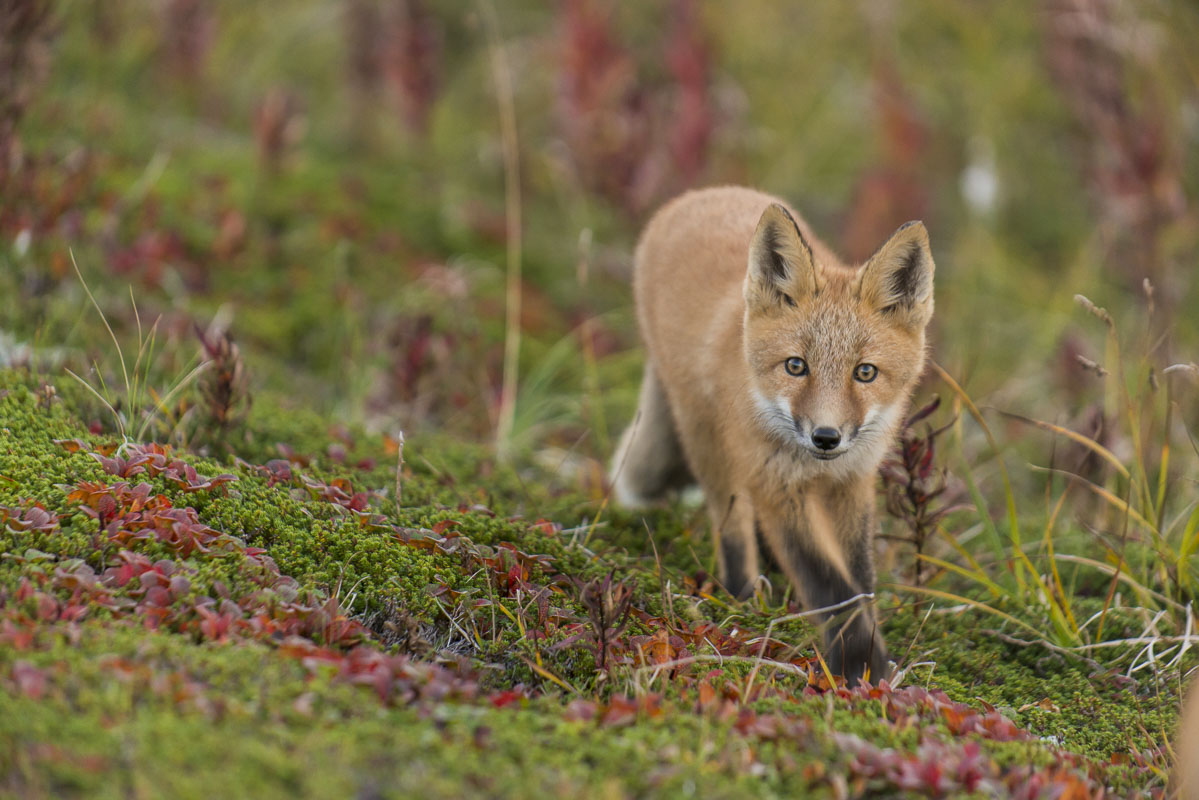 Alaska, Autumn, Katmai National Preserve, workshops, photo