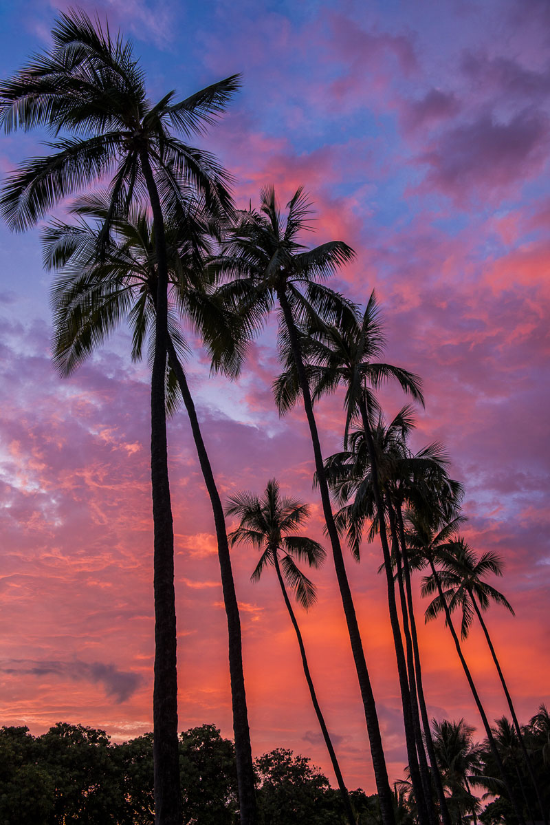 A row of palm trees stand tall against a colorful sunset in Kona on the Island of Hawaii in late summer.