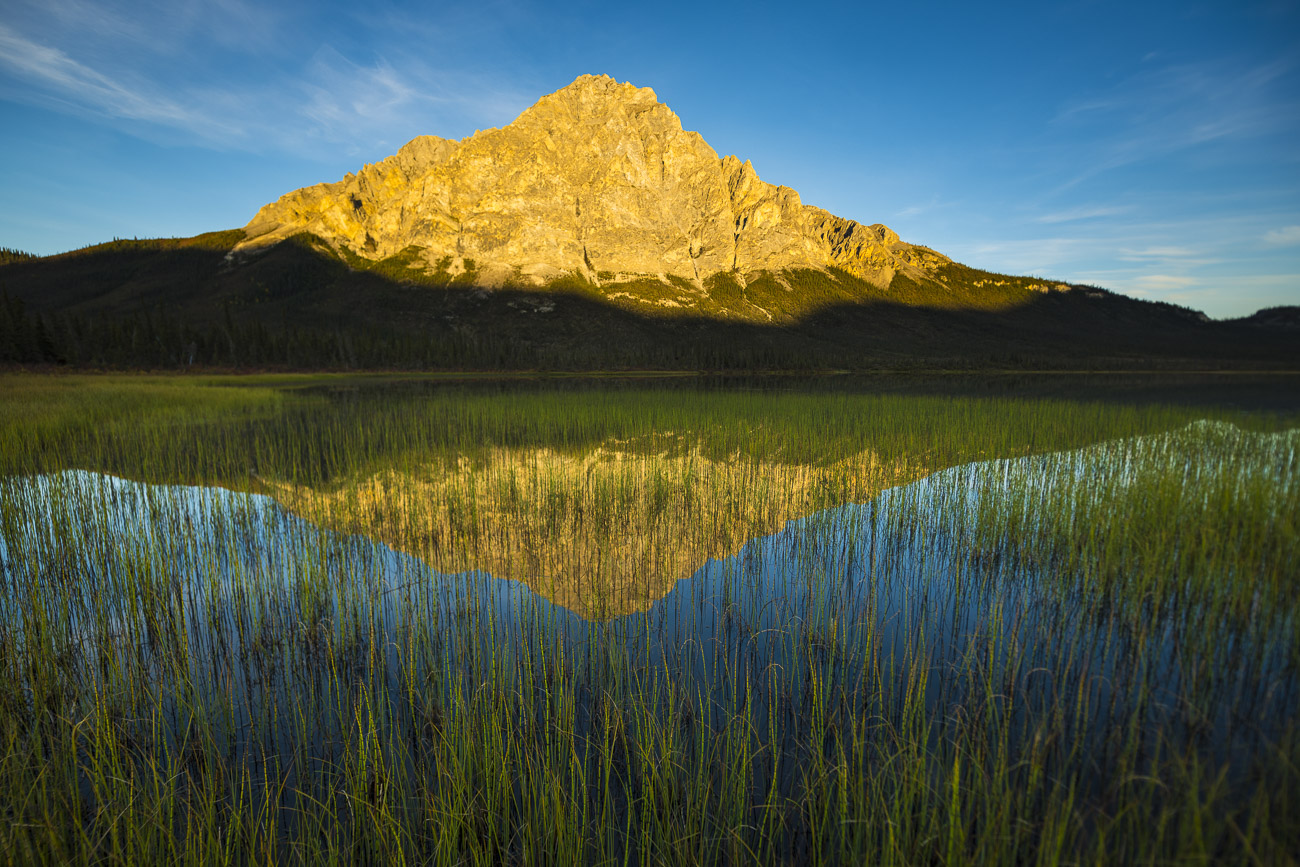 A field of reeds spreads out away from shore in a small lake along the Dalton Higway. Evening sun lights up the face of Mt. Dillon...