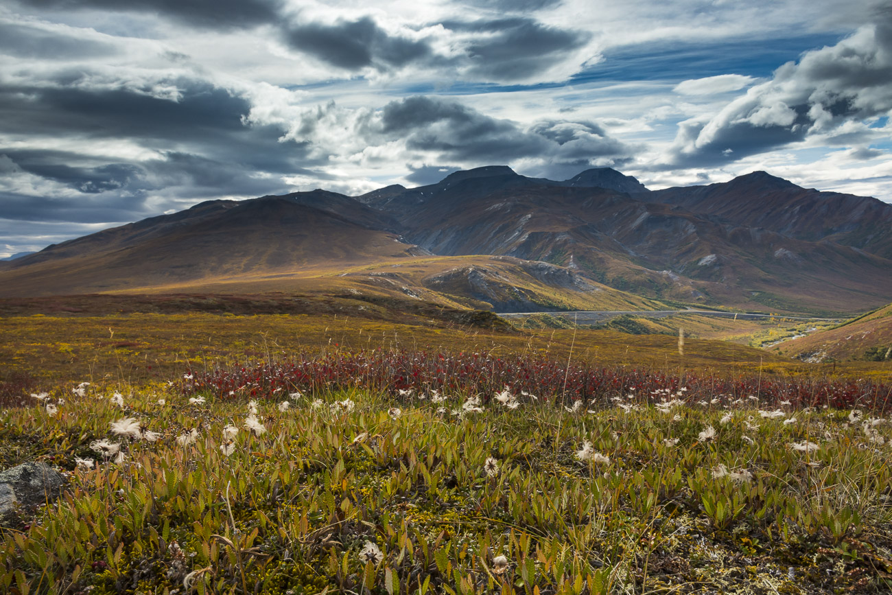 I liked how the afternoon sunlight was backlighting a patch of cotton grass on the tundra of the Chandalar Shelf. So, I got the...