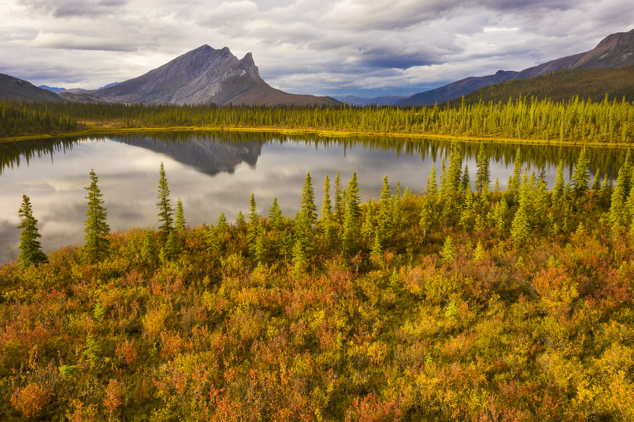 Morning light helps to pop the fall colors developing among willow and dwarf birch surrounding a pond in the Brooks Range. The...