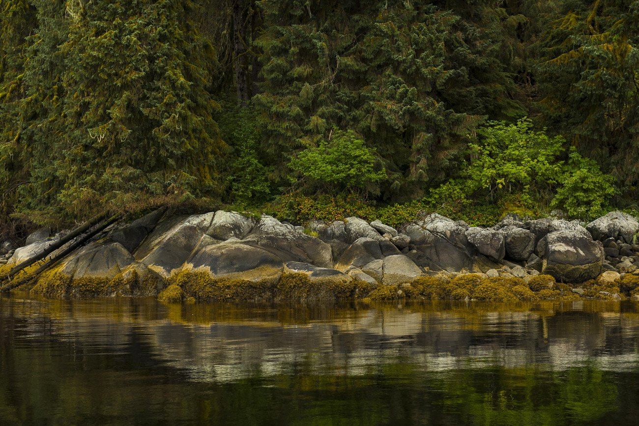 Calm water reflects the coastline of the Tongass National Forest, showing the transition from forest to exposed barnacles below...