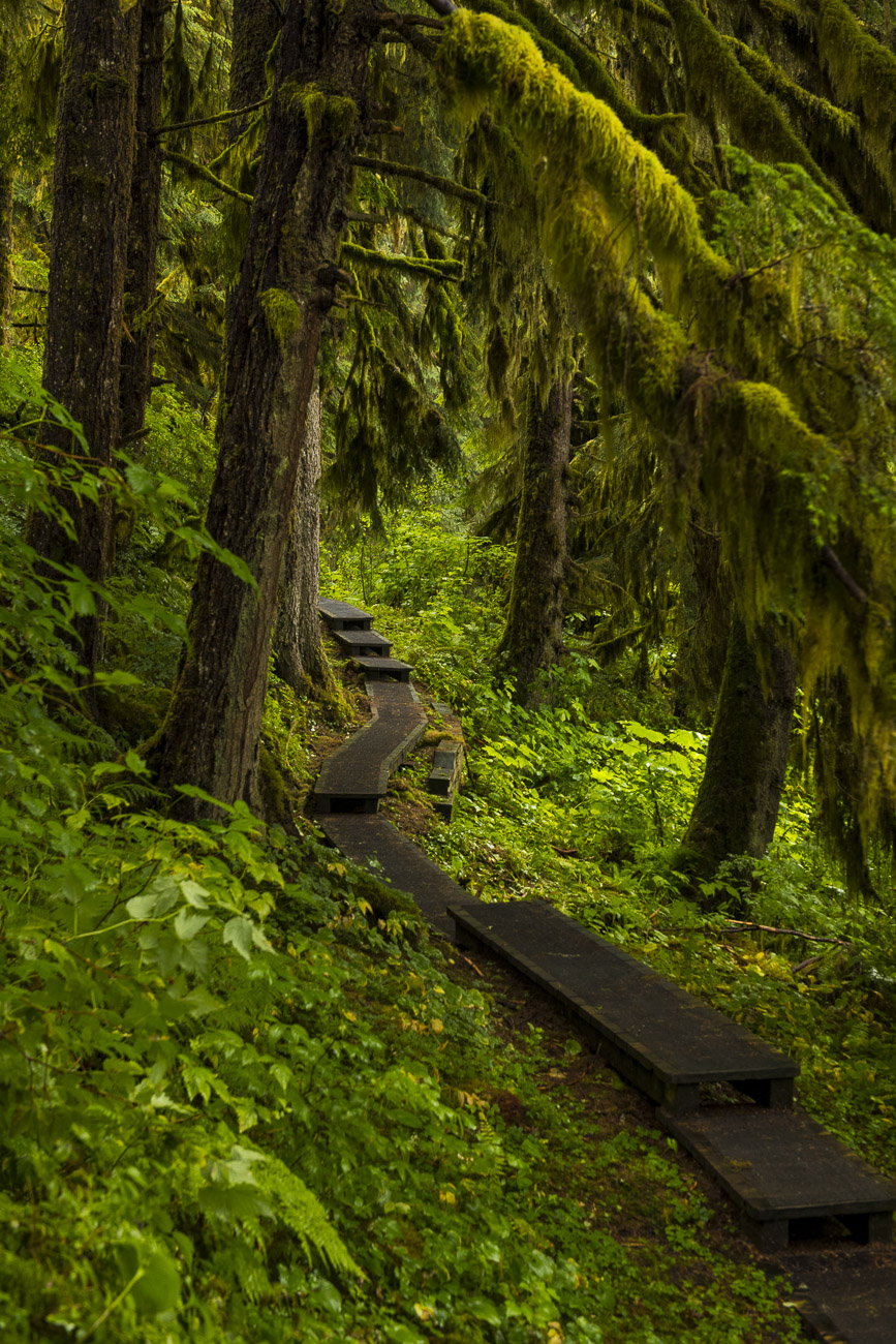 A boardwalk trail winds its way through the temperate rain forest of Tongass National Forest, leading the way to the viewing...