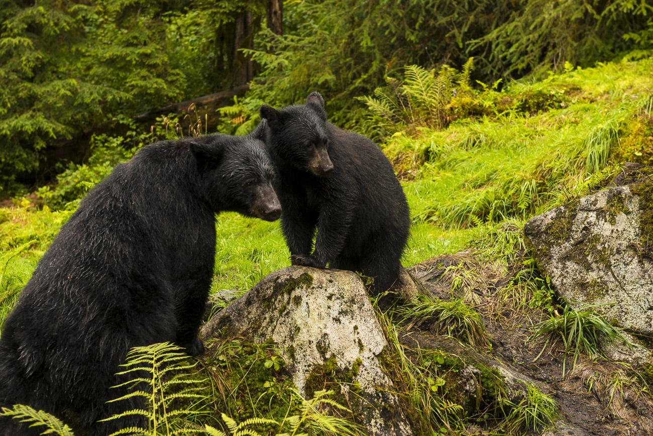 Alaska, Southeast Alaska, Wrangell, summer, photo