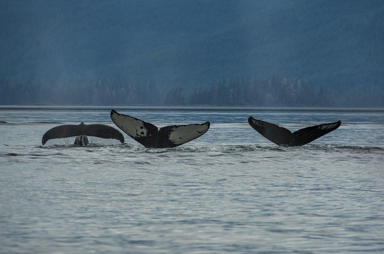 Alaska, Southeast Alaska, Wrangell, coastal, summer, photo