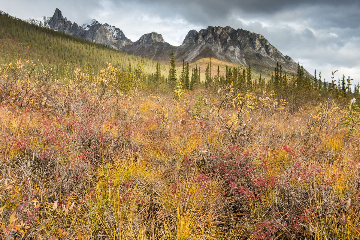 A patch of golden tussocks add a pop of color to the lower slope of a mountin in the Brooks Range near the Dalton Highway.