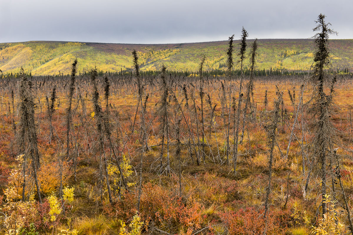 Alaska, Arctic, Autumn, Dalton Highway, landscape, photo