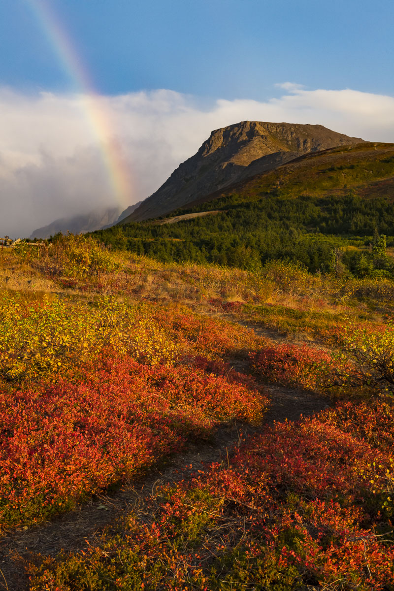 Dwarf birch and lowbush blueberries in autumn with rainbow and Flattop Mountain, Chugach State Park.