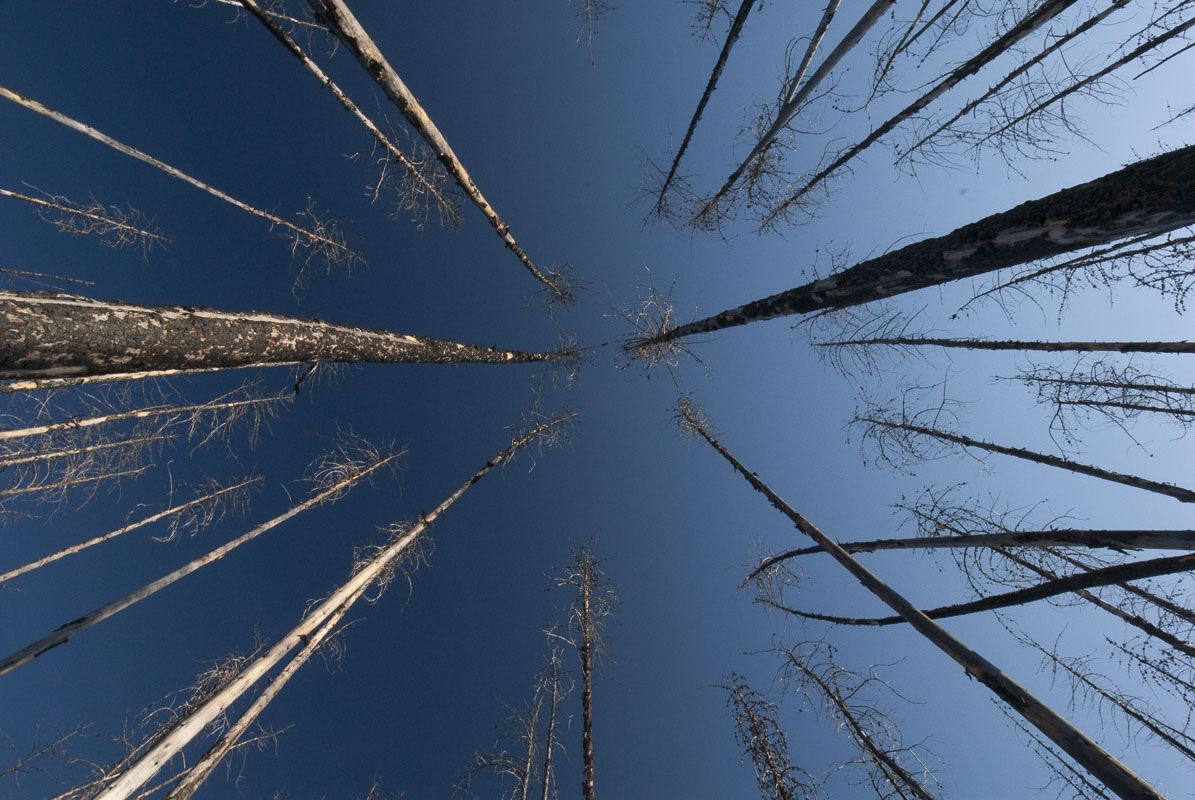 Flathead National Forest, blue, burn, fire, forest, perspective, trees, woods, photo