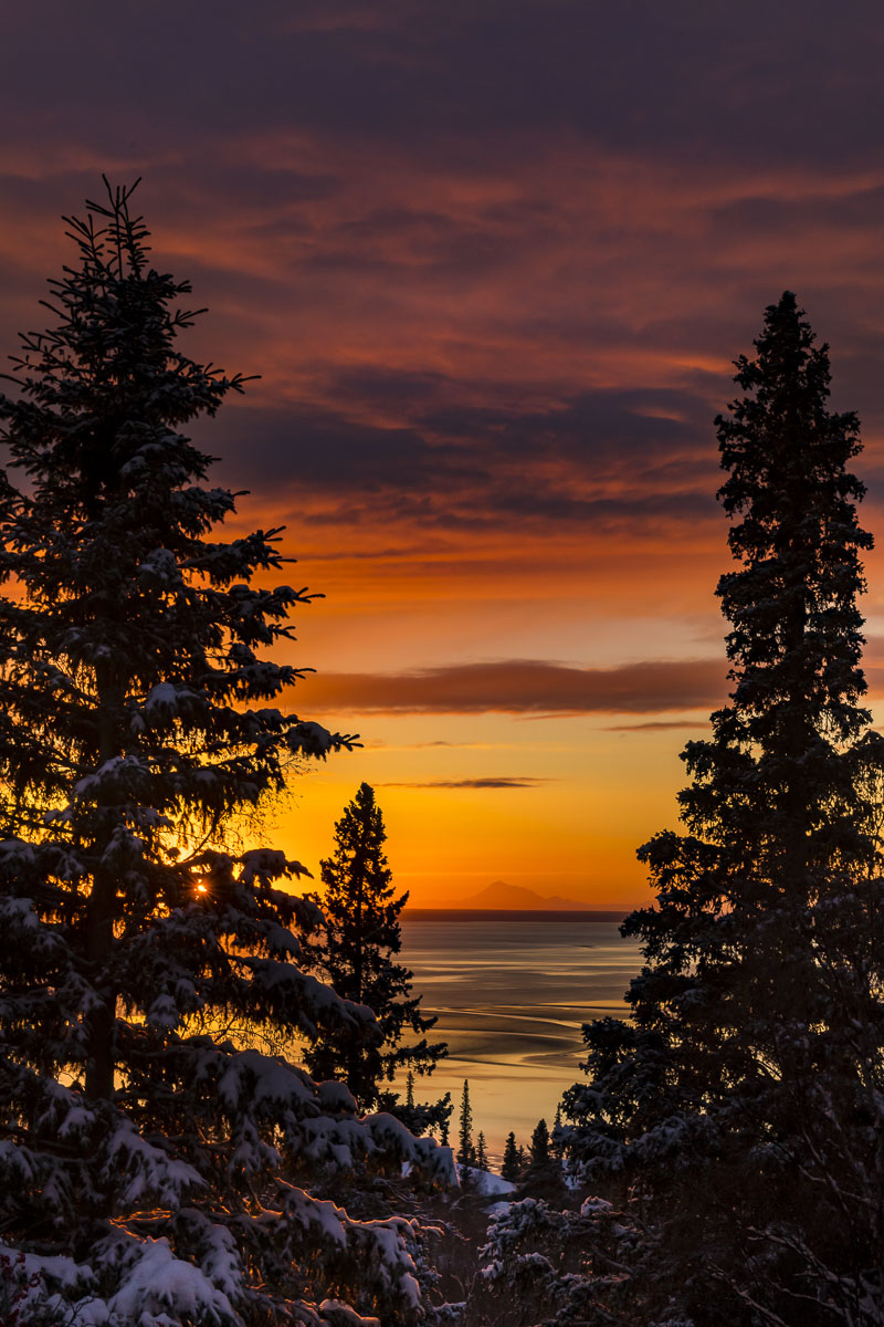 Cook Inlet, Mt. Redoubt, Sitka spruce, sunset, winter, photo