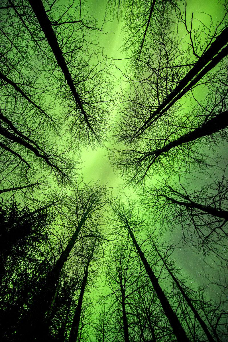 Alaska, Autumn, aurora borealis, landscape, photo