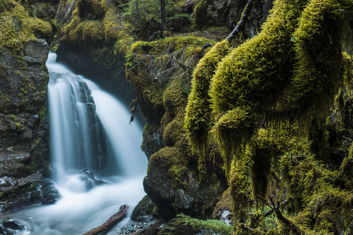 Sidelit moss provide an accent to the rainforest scene surrounding Virgin Creek Falls in Girdwood, Alaska.