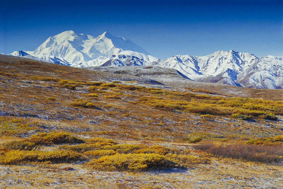 Denali rises above a snow-dusted autumn landscape on a clear morning. Denali National Park & Preserve, Alaska. Tango drum scan...
